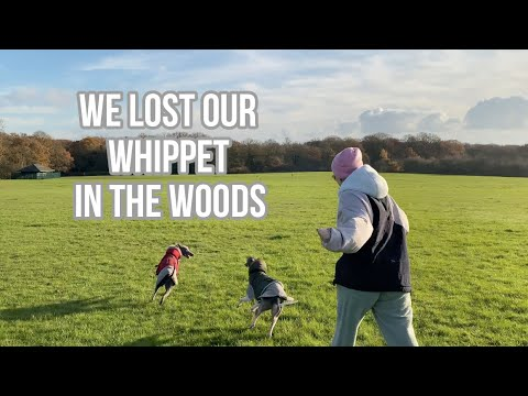 WE LOST OUR WHIPPET IN THE WOODS | DOG VLOG | Raquel Mendes