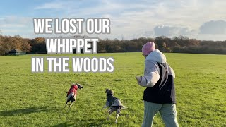 WE LOST OUR WHIPPET IN THE WOODS   DOG VLOG   Raquel Mendes