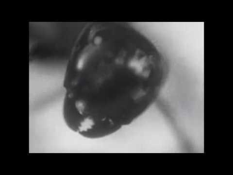 Bobby Horseshoe - Inquilinism