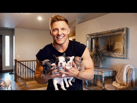 STEALING FRENCH BULLDOGS!?