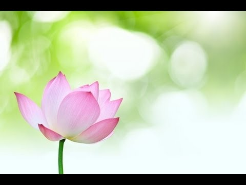 8 Hour Relaxing music: Spa Music: New Age Music; Peaceful Music; music for Relaxation;Yoga Music 🌅57