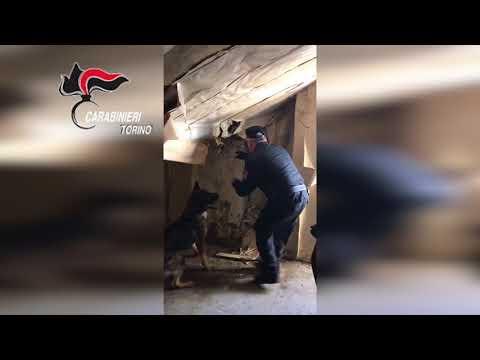 TORINO - operazione antidroga carabinieri, arrestati due marocchini