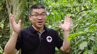 Sun Bear Rescue | CNN Hero Siew Te Wong Protecting The World's Smallest Bear | BSBCC