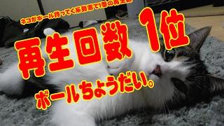 【猫芸】ボールを持ってくる猫 ① おもしろいよ (続編あり) My cat is so cut!。 Cat to bring the ball。