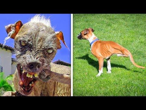 Dünya'da Çok Nadir Görülen 10 Tuhaf Köpek