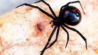 пауки россии самые страшные пауки фото