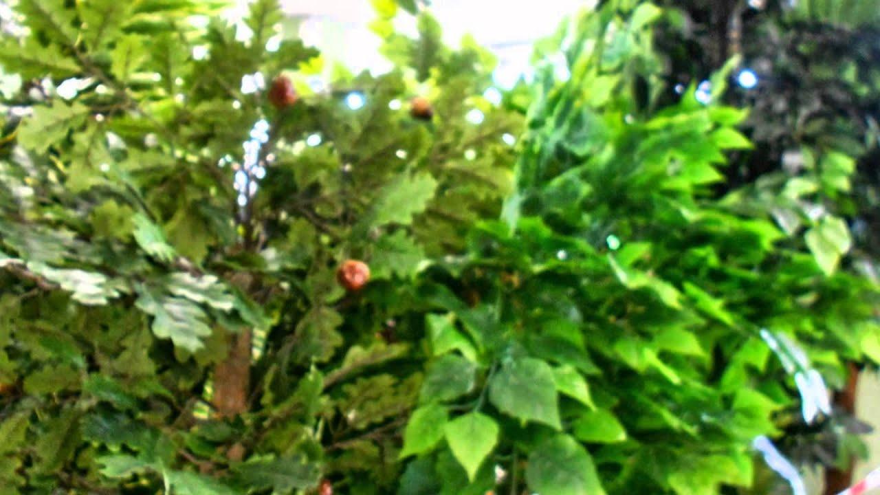 Мы продаем в спб уличные и комнатные растения, цветы – под посадку и срезанные, у нас всегда можно купить ухоженные и готовые горшечные растения, а также саженцы и семена. В каталоге магазина мандарин есть сопутствующие товары, что необходимы для ухода за растениями: кашпо и.