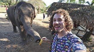 Trabajé un día en un refugio de elefantes 🐘 TAILANDIA 🇹🇭