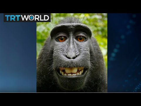 Monkey Selfie Lawsuit: PETA Director Elisa Allen discusses the settled lawsuit