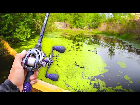 Searching For GIANT Bass In SMALL Backwater Creeks! (Kayak Fishing)