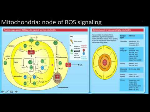 Reactive oxygen species (ros): signaling and oxidative stress