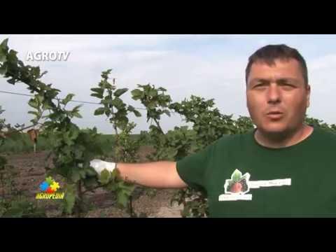 Agropedia taierea murului