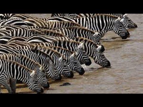 Zebra Fest I Ringsted
