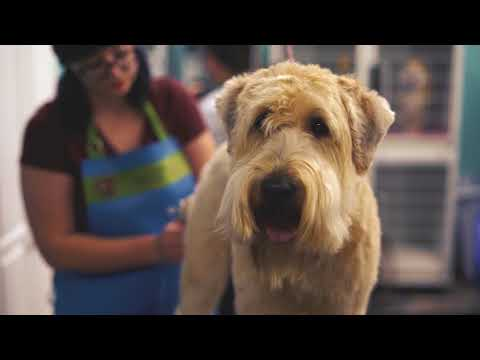 Nature's Pet Market in Salem Joins OregonSaves - Retirement Savings Program