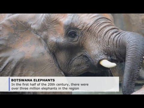 Botswana Lifts Elephant Hunting Ban