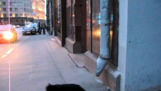 кошка перебегающая дорогу