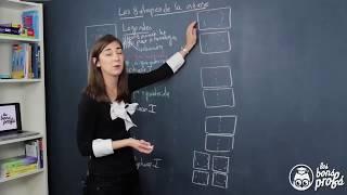 Les 8 étapes de la méiose - Le schéma