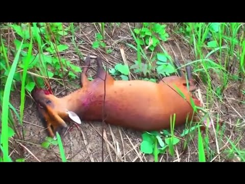 Tribe Hunting wild animals video- Horror animal hunting Part 2