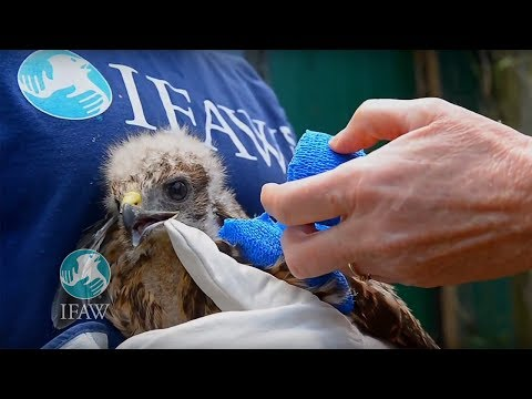 IFAW Emergency Response for Wildlife Victims From Tornados in Moore, Oklahoma