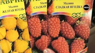 Малина и клубника (сажаем семена на рассаду). Planting the seeds of raspberries and strawberries.
