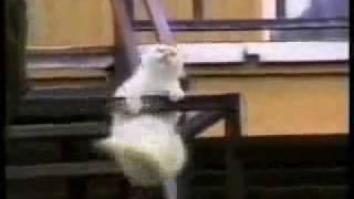 Juokingos kates