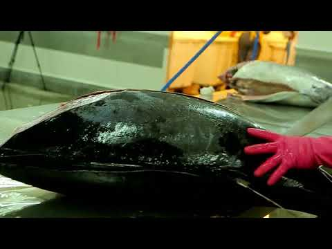 Sri Lanka's One Of The Largest Exporter Of Tuna