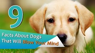 9 Facts About Dogs That Will Blow Your Mind