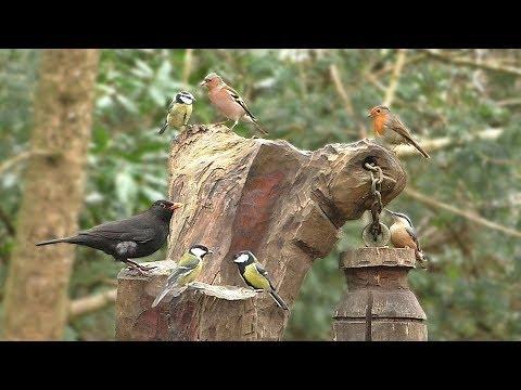 Birds Galore -
