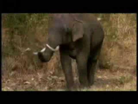 En el vientre materno - Animales (El Elefante) 1/5