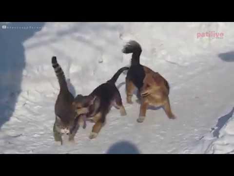Kar Görünce Kendinden Geçen 15 Sevimli Köpek