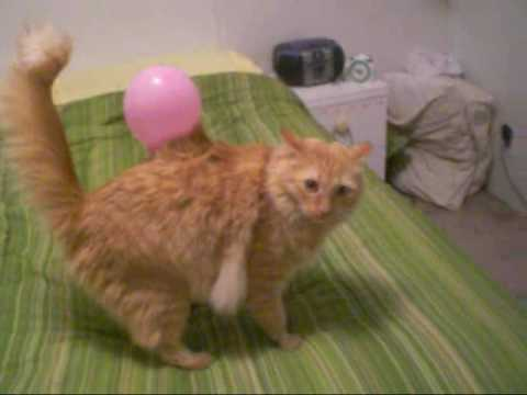 Static Electricity Cat Youtube