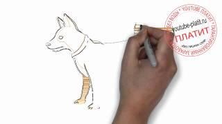 Нарисованные карандашом собаки  Как поэтапно нарисовать хвостатую собаку