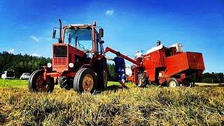 Javapjūtė 2016 / Žniwa 2016 / Harvesting 2016