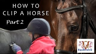 How To Clip A Horse - Clipping a Blanket Clip and Hunter Clip including Modern Hunter Clip