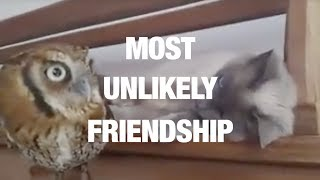 Owl and Pussycat Are Best of Friends thumbnail