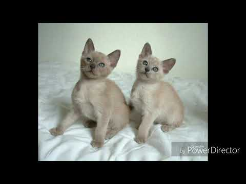 Kinds of Cats 1