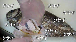 猛毒の針を持つ魚【アイゴ】の激クサ内臓が美味いらしいのでたべてみたら。。。