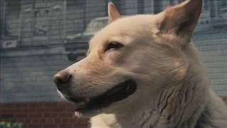 A DOG'S LIFE Official Trailer (2015) Documentary Movie HD