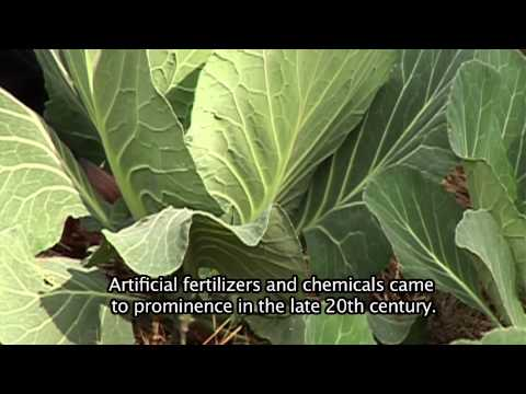 Ispani - Episode 16 - Organic Farming - Sector Overview