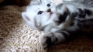 Naomi the  Kitten wants to reach the sky | Too Cute