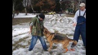 Училище за кучета. Обучение на кучета
