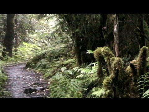 Rain Forest Hike at Juneau Alaska