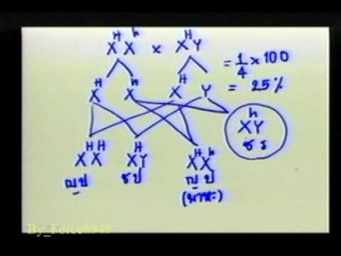 วิทยาศาสตร์ ม 3 การถ่ายทอดลักษณะพันธุกรรม สาธิต ม รามฯ Force8949 3 of 9