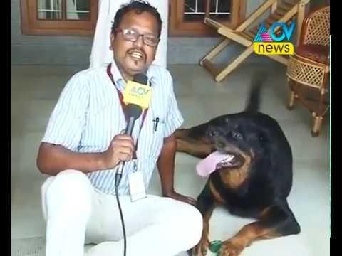 Vegetarian Rottweiler Dog at Thrissur , Kerala , Hometown of Priya varrier -Not dangerous- Malayalam