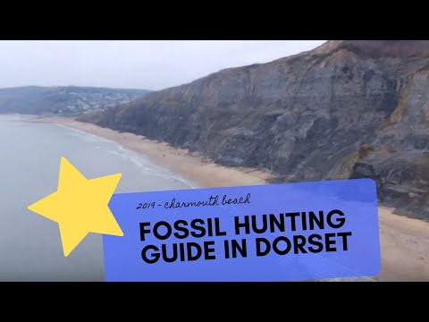 FOSSIL HUNTING - On Charmouth Beach In Dorset