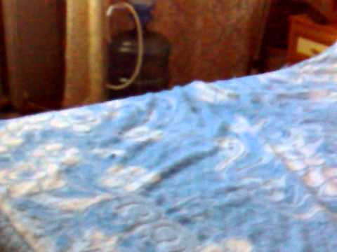 испугали спящее животное.mp4