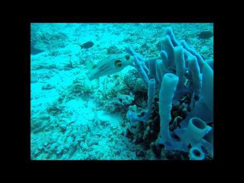 Lombok Dive Trip