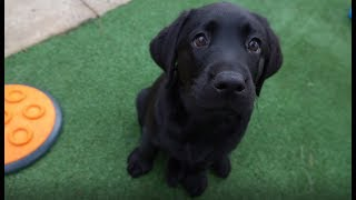 2018 Guide Dogs Graduation Day  Journey of a Guide Dog