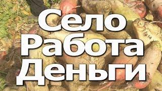 Как заработать деньги с нуля живя в деревне/Идеи заработка без вложения/Деревенский миллионер