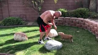 Trening Koksa z Hardkorowym Popkiem 2017 Video
